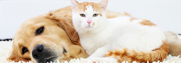 assurance-chien-chat-gmf.jpg