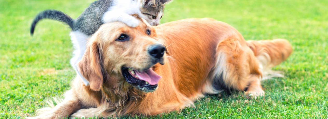 Assurance Animal Gmf